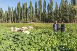 傅廷栋:可再发展1000万亩饲料油菜
