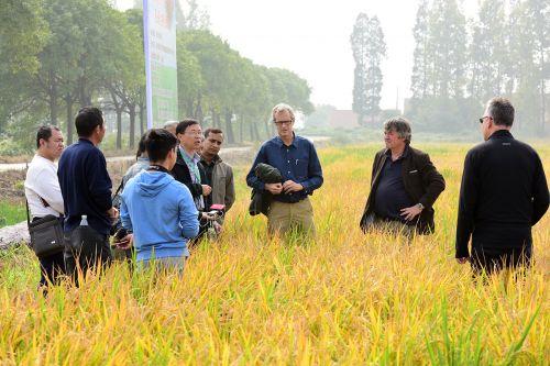 彭少兵教授为Mark Tester等介绍再生稻技术