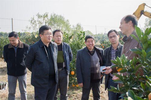 郭大勇教授向嘉宾们介绍邓秀新院士改进的纽荷尔脐橙(学通社记者 彭雨格 摄)