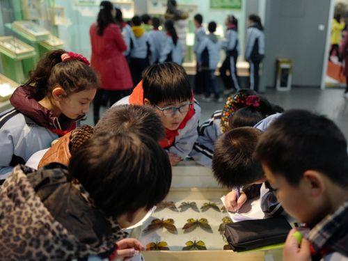 20171129-同学们认真观看标本 郭玉涛摄