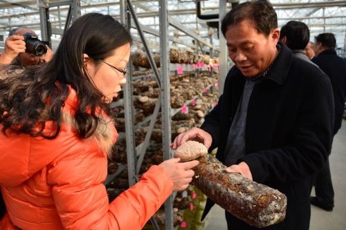 6823 老师了解香菇品种