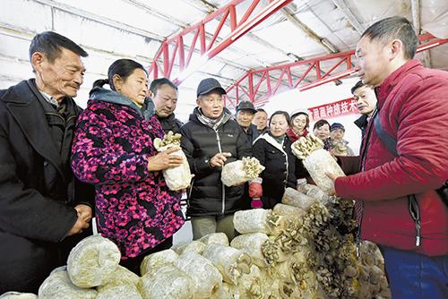 华中农业大学教授现场传授平菇种植技术