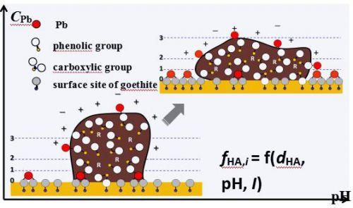 图2氧化铁-水界面Pb吸附特征与胡敏酸分子分布特征示意图(放置于正文第一段后)