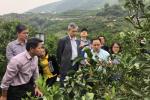 2018年湖北省晚熟柑橘品鉴会在宜昌召开
