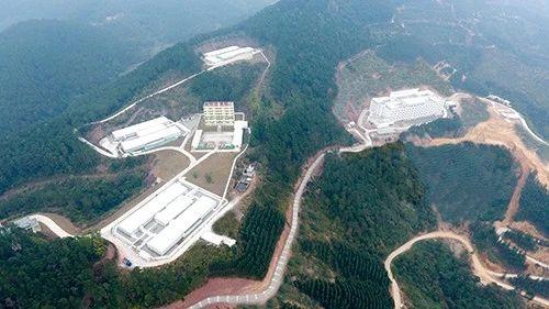 全球最大的种公猪养殖基地(供图:扬翔)