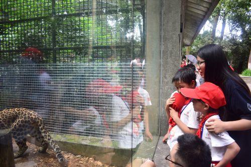 孩子们在杭州动物园观看动物