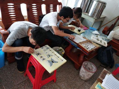 昆虫学课程实践制作标本
