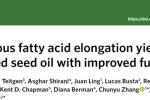 油菜团队首次发现有工业价值特殊脂肪酸