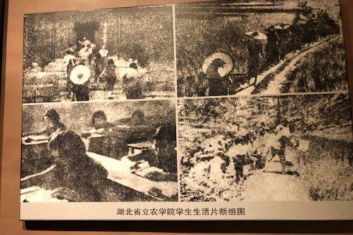 图为湖北省立农学院学生生活片段