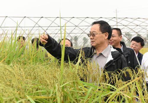 """张启发一行在""""刘应文放心粮""""基地查看水稻生长情况"""