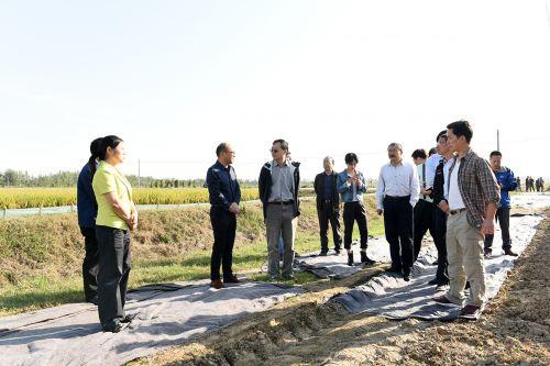 张启发一行在横堤村万亩虾稻共作基地调研