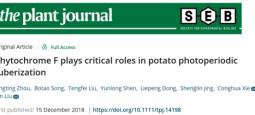 马铃薯块茎形成的光周期调控机理研究取得新进展