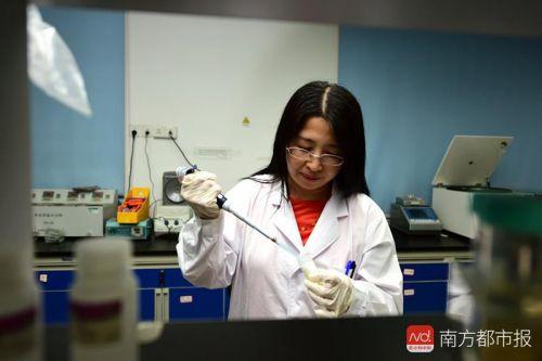 华中农业大学教授赵书红在实验室(摄影:刘涛)_副本.jpg