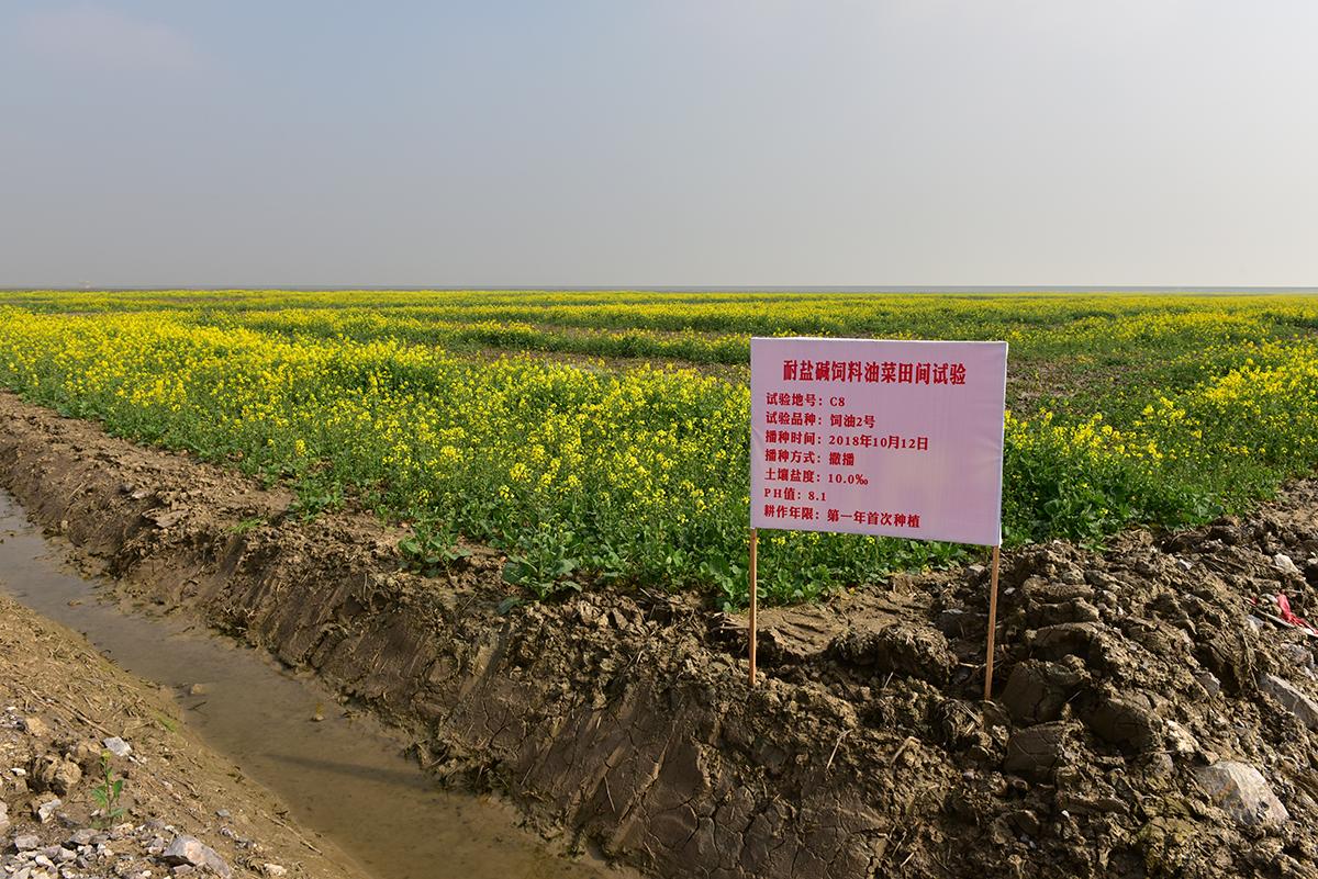 1400亩油菜田