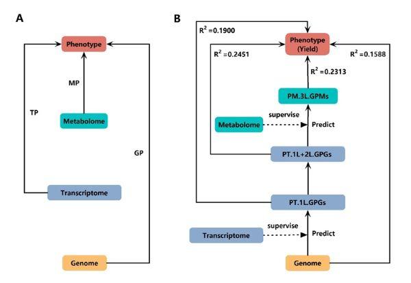 MLLASSO模型的算法流程图wps图片