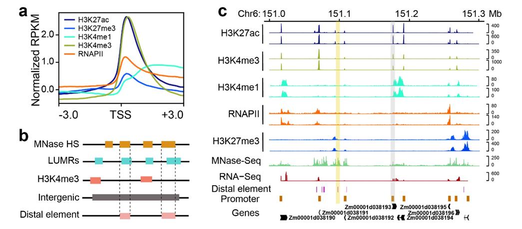 我校学者联手绘制玉米高分辨三维基因组图谱