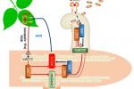 我校揭示GmNINa-miR172c-NNC1模块调控大豆根瘤数量机制