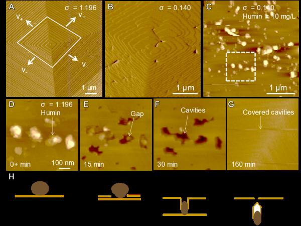 原位原子力显微镜观察胡敏素在方解石(101 ̅4)面吸附以及包埋的动力学过程