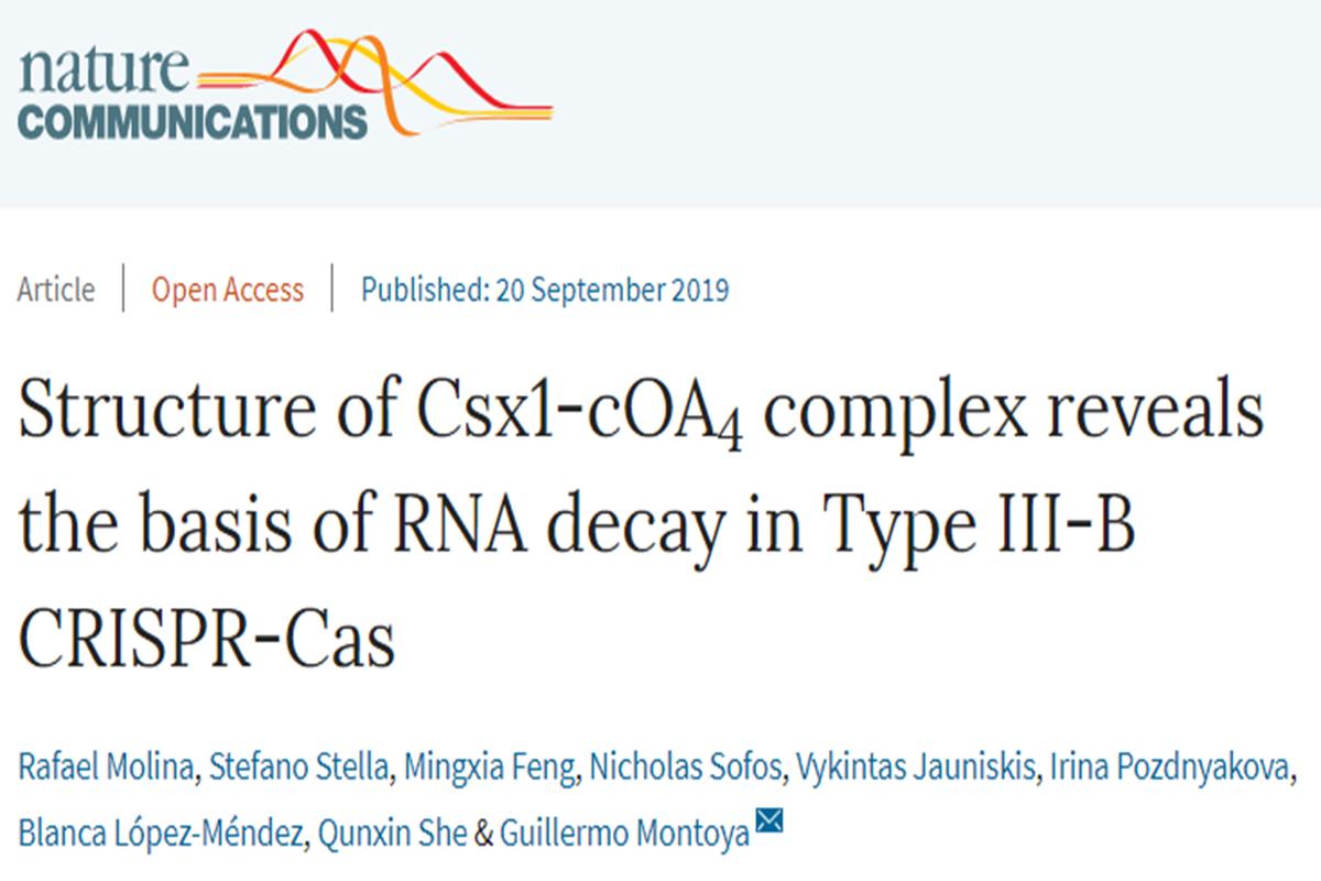 我校解析III-B型CRISPR-Cas系统Csx1-cOA4复合体结构并揭示其切割RNA机制_科学研究_新闻_南湖新闻网