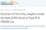 我校解析III-B型CRISPR-Cas系统Csx1-cOA4复合体结构并揭示其切割RNA机制
