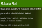 我校在解析双子叶植物磷分配的生物学机制方面取得进展