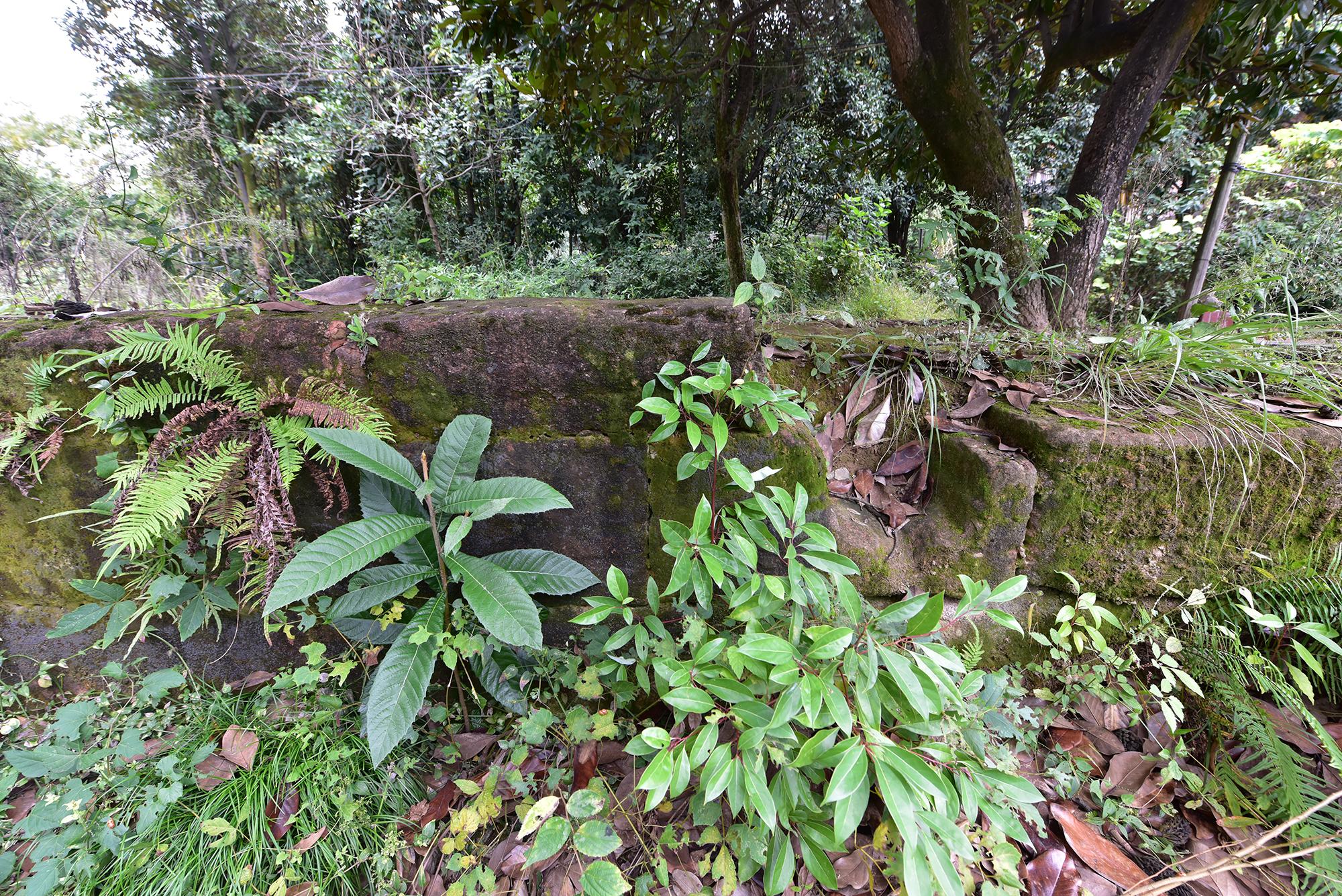 金子坝校园遗存的墙基石
