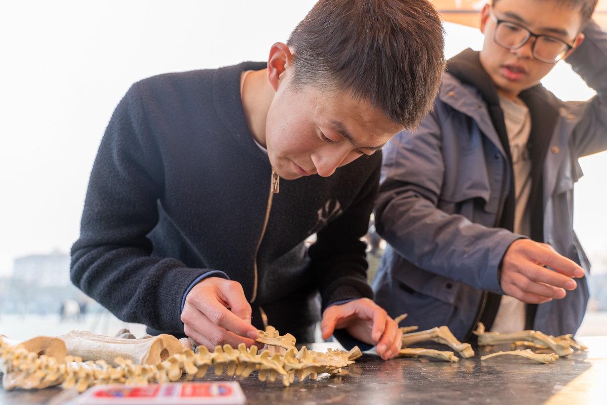 学生正在拼装恐龙骨架模型 【学通社记者 刘博文 摄】
