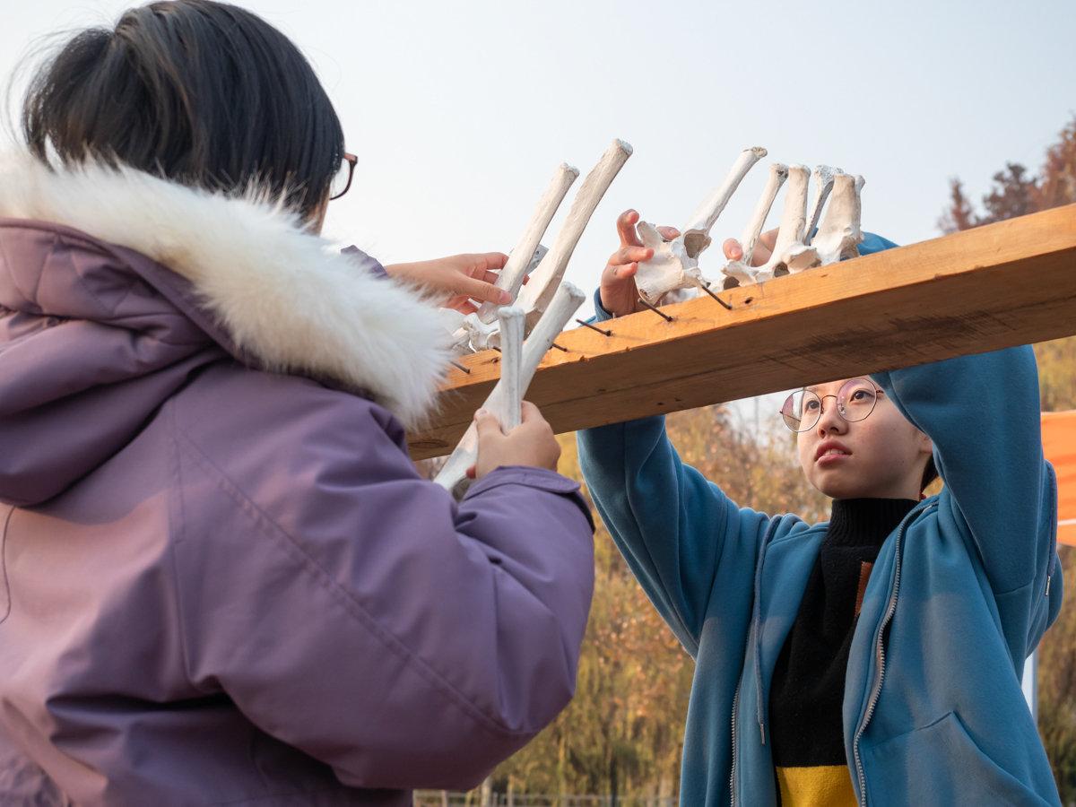 同学们正在拼接牛骨架【学通社记者 包丞 摄】