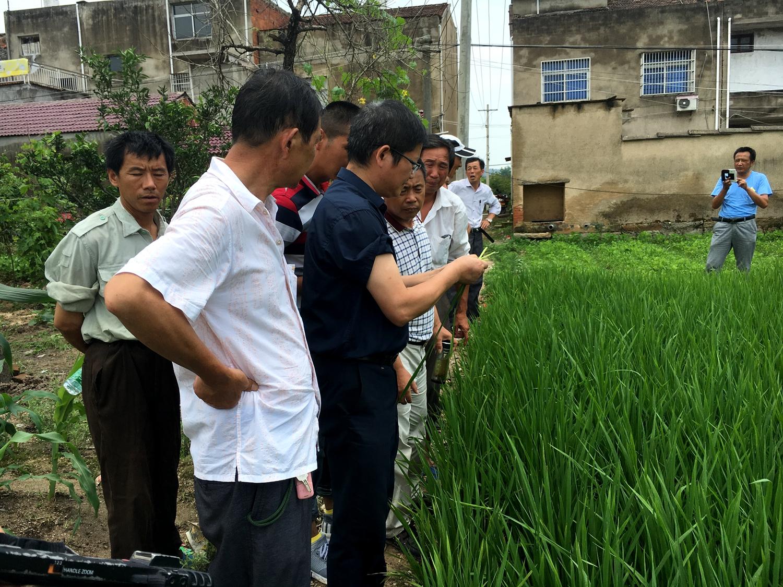专家现场指导再生稻种植
