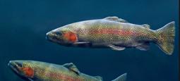 我校揭示鱼类免疫球蛋白在维持黏膜共生微生物稳态中的免疫机制