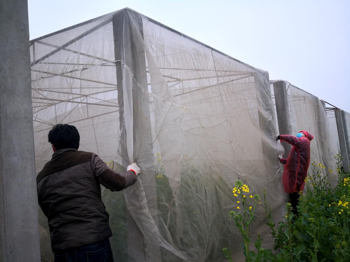 校园油菜科研基地大棚搭建