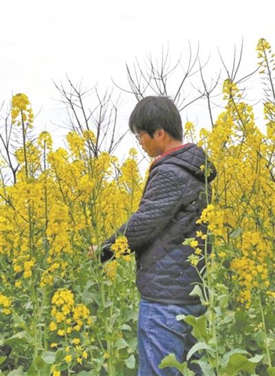 西北农林科技大学学生秦梦凡在查看村里的油菜花生长情况。