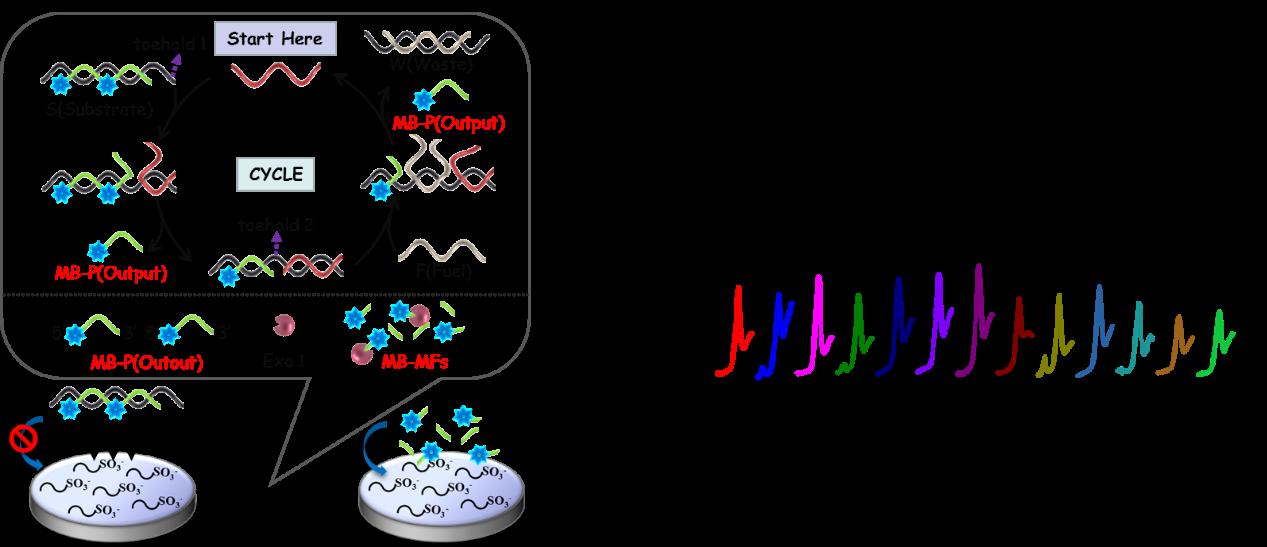 利用均相电化学生物传感器对牛源性成分的特异性检测