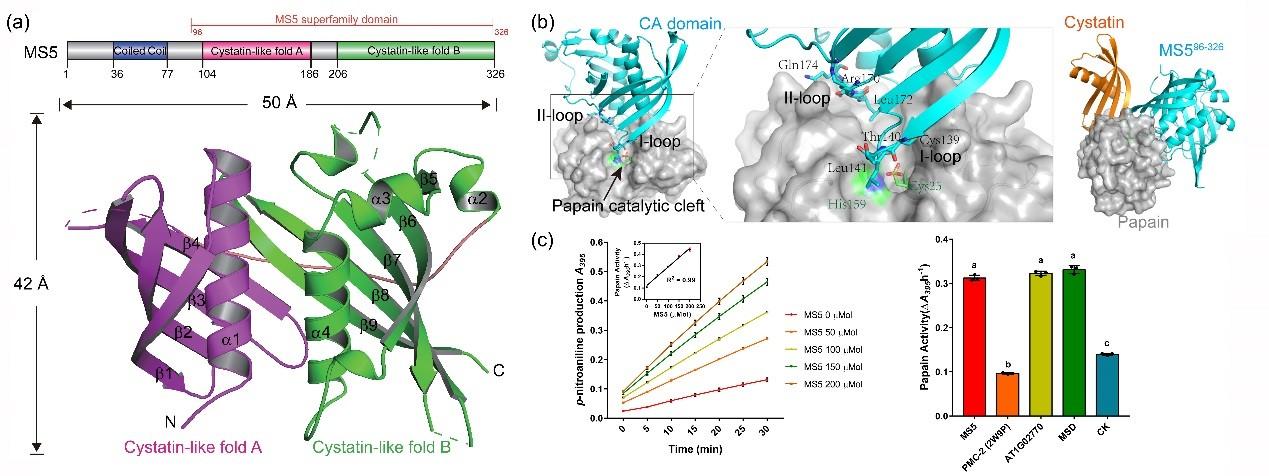 图2 MS5蛋白结构及生化功能