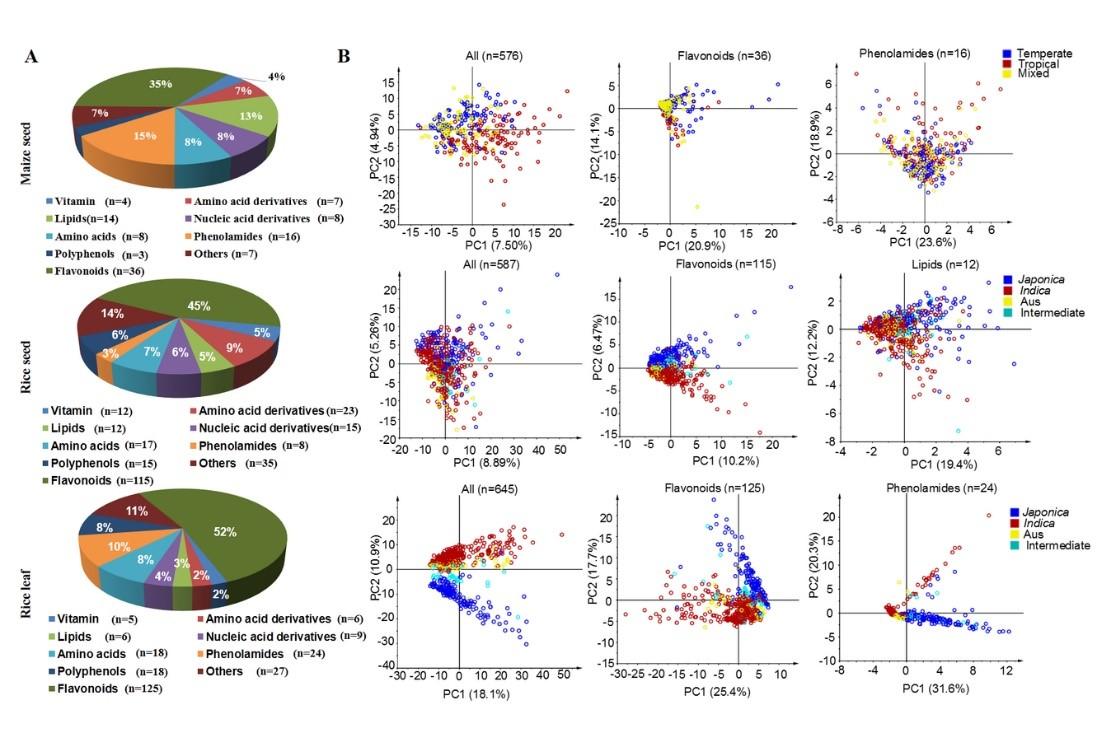 图1 玉米种子和水稻种子、叶片代谢组成及其PCA分析