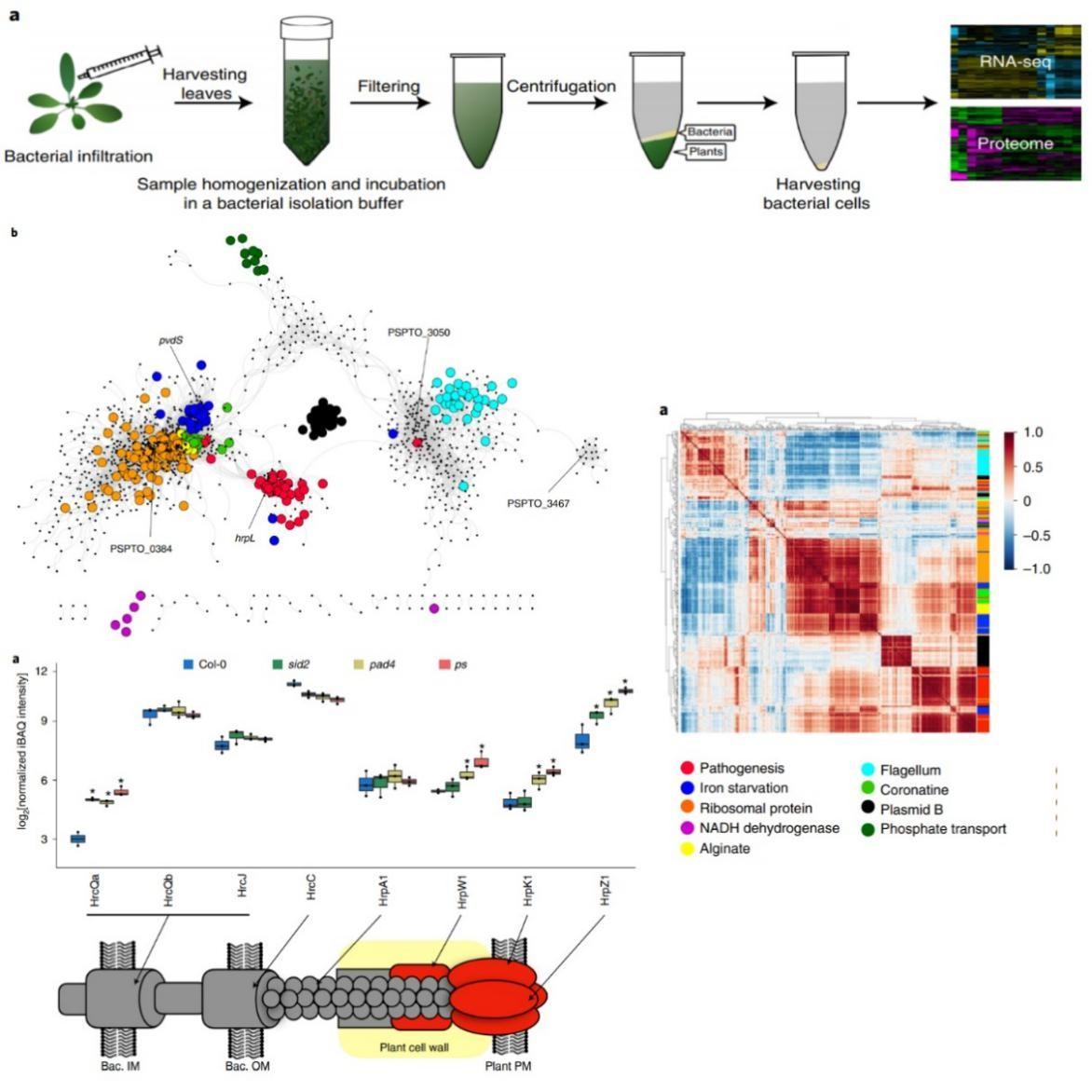 图1. 植物体内原位细菌转录组及蛋白质组学技术揭示病原细菌基因调控网络以及植物免疫系统特异性抑制细菌侵染机制