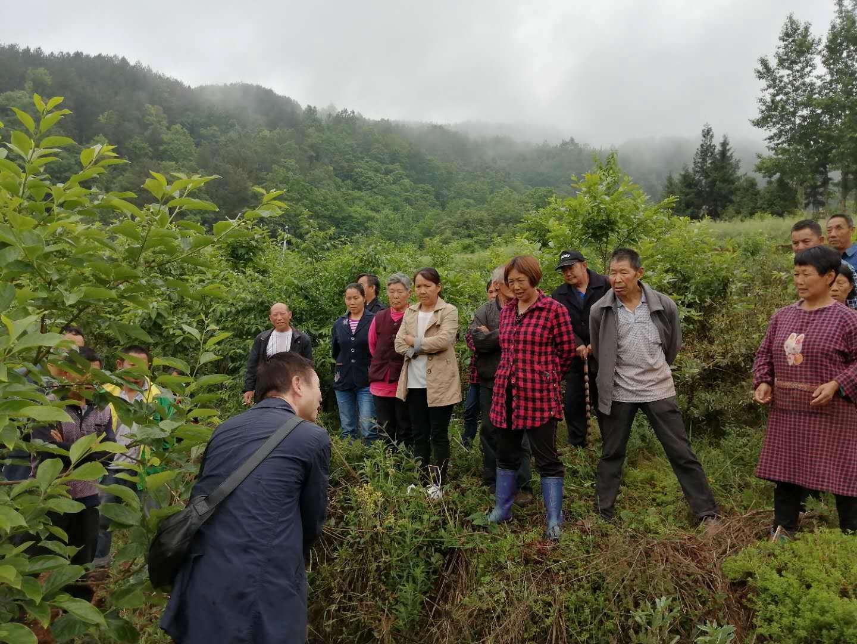 园艺林学学院入村进行党建结对活动并指导村民进行夏季甜柿管护