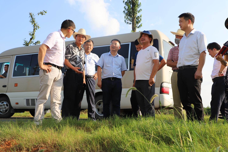 双溪镇毛祠村中药材种植基地现场调研指导