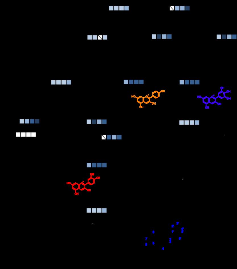 图二、儿茶素生物合成通路