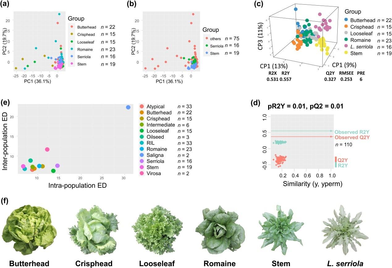 图一.初生代谢产物在不同莴苣类型间的变异