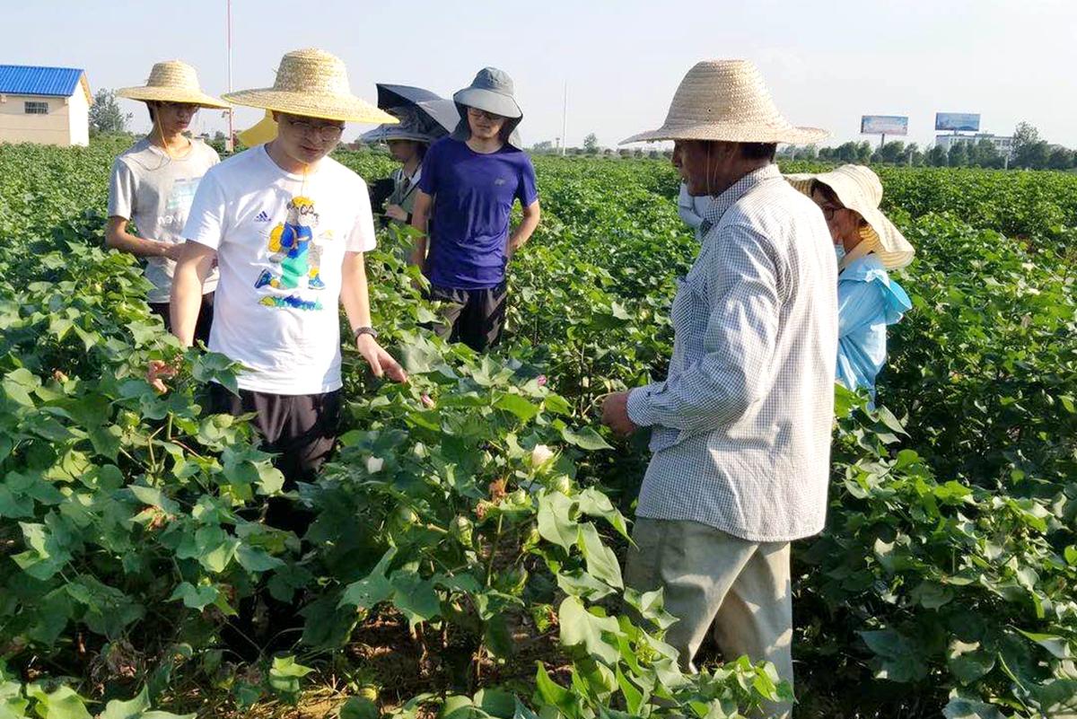 王茂军和学生在实验基地进行田间棉花标记挂牌和取样