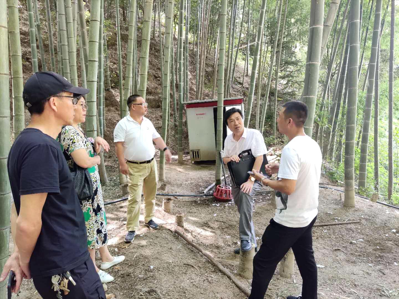 调研白竹生产