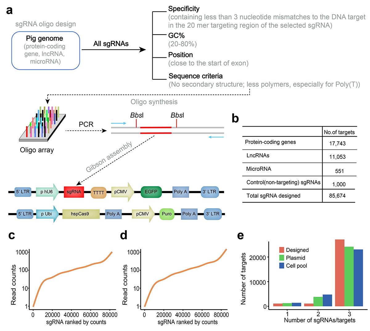图1. 猪全基因组CRISPR敲除文库(PigGeCKO)设计和构建
