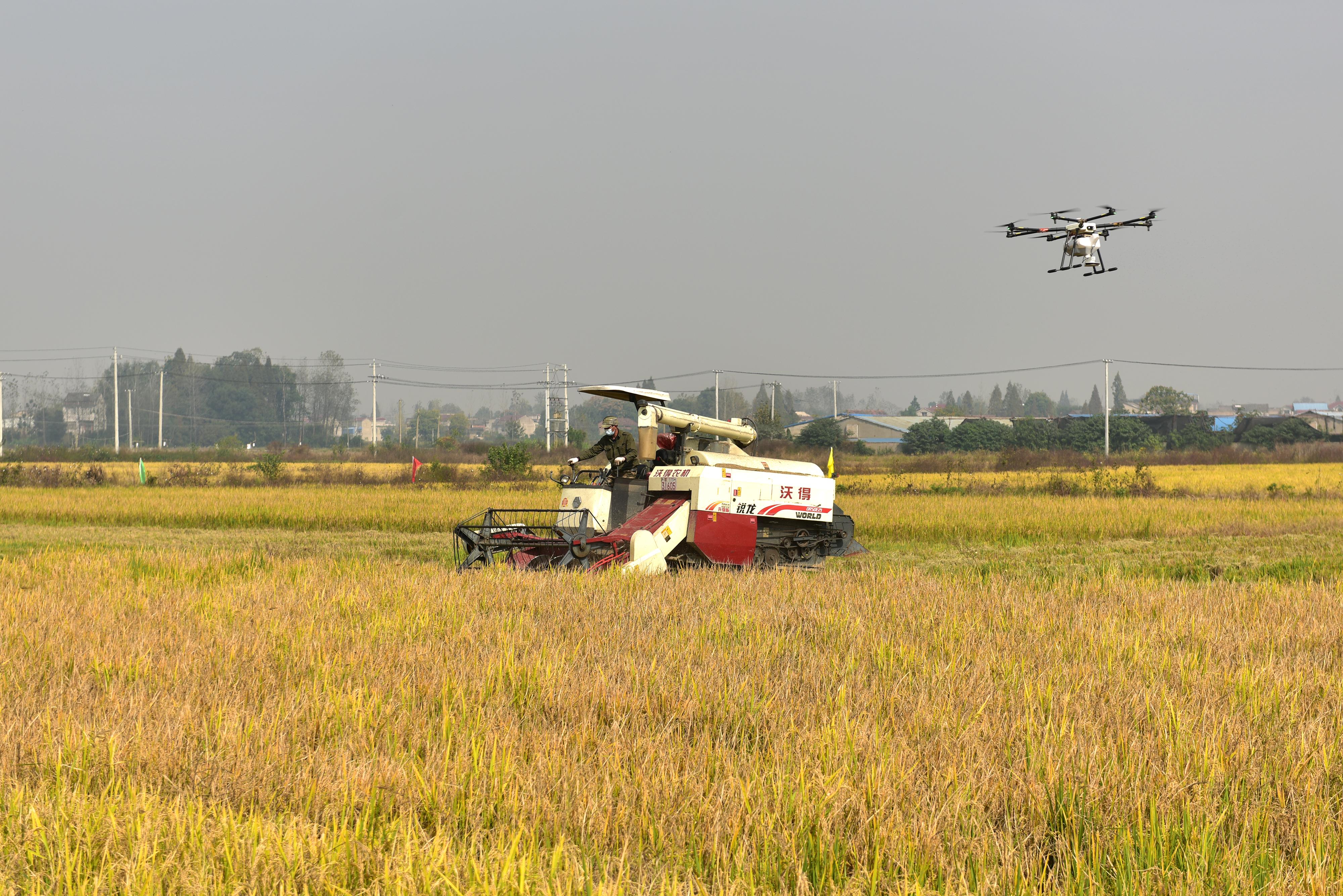 无人机飞播,机械收获时秸秆还田覆盖