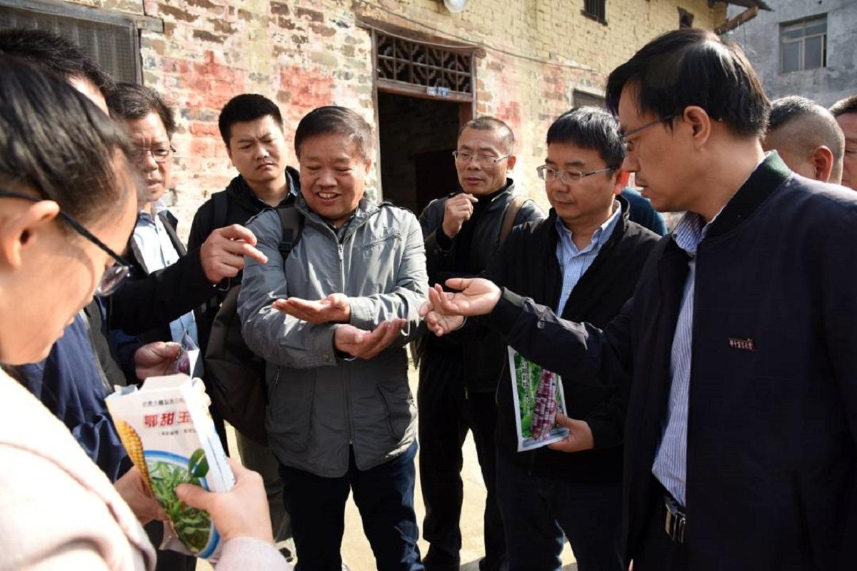 专家与农民讨论甜玉米的种植情况