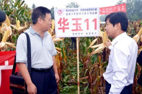 """""""华玉11""""在西南农户中博得一片好传(刘永忠 供图)"""