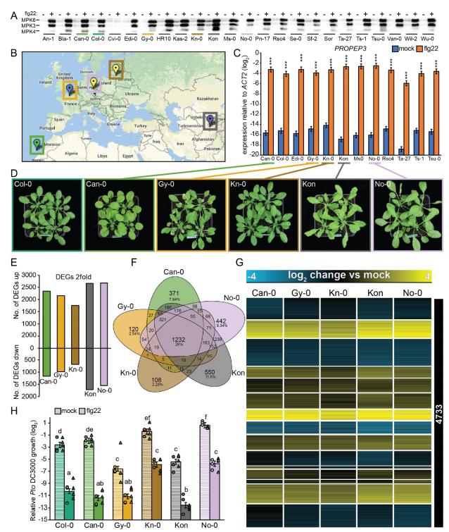 不同遗传背景和地理来源迥异的拟南芥品系对flg22的转录响应高度一致