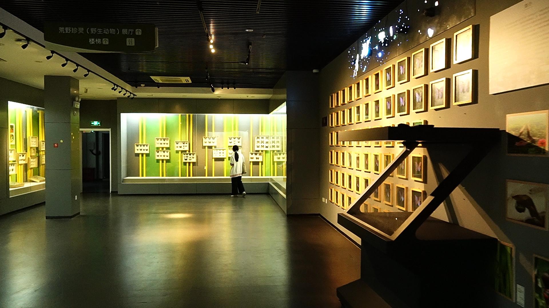 ▲华中农业大学博物馆内(戴壮 摄)