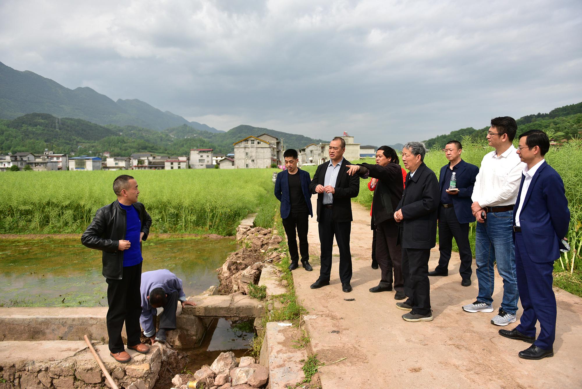 傅廷栋院士28日下午在三里河乡河水坪村调研油菜产业(记者 刘涛 摄)