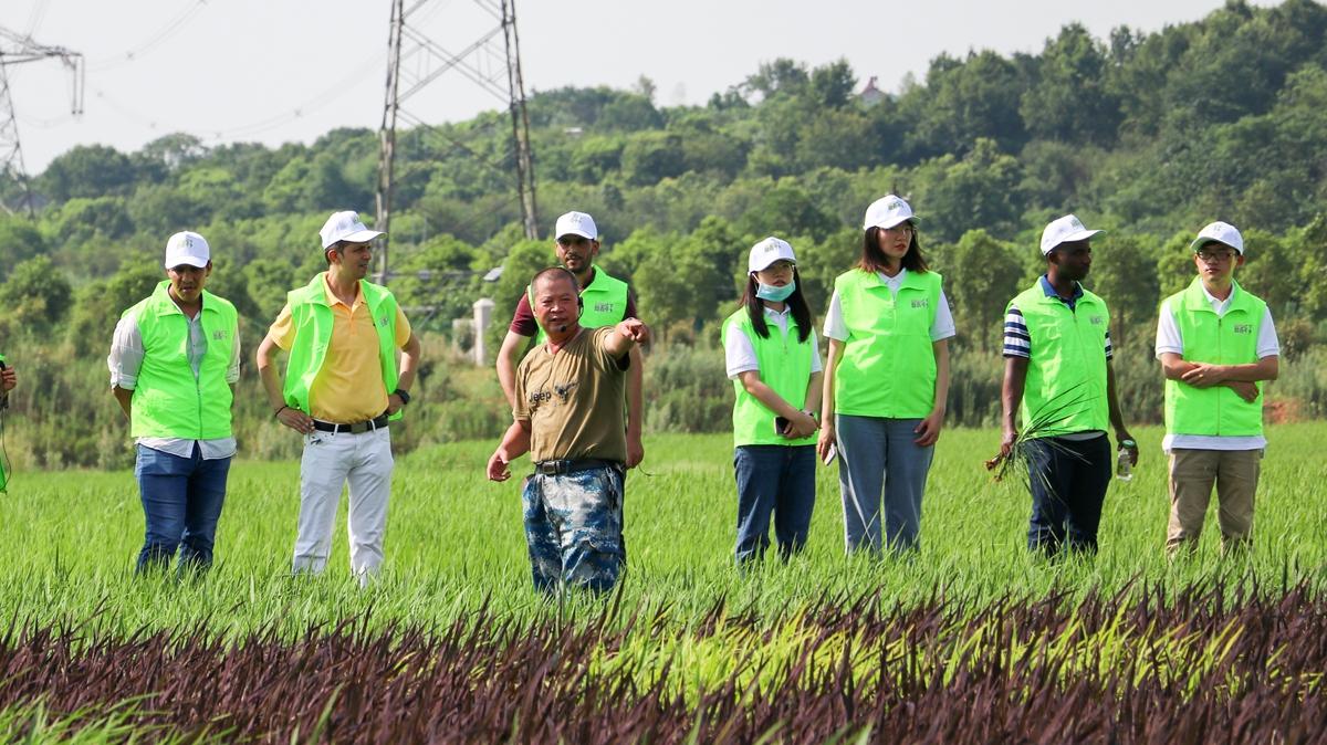 实践团在彩色稻田了解水稻培育 摄影周子恒_副本